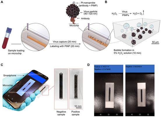 Science子刊:新病毒检测技术利用智能手机摄像头检测多种病毒感染