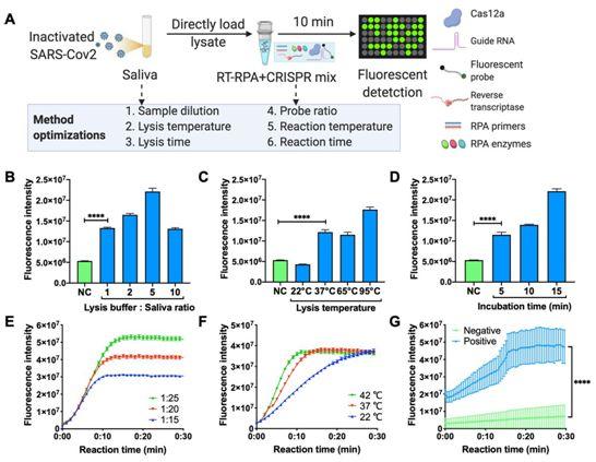 Science子刊:利用智能手机超灵敏定量检测唾液中的新冠病毒